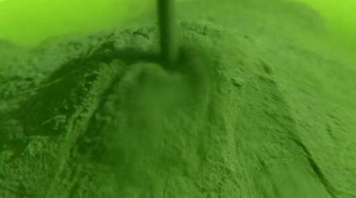 Cholorella mit hohem Chlorophyllgehalt